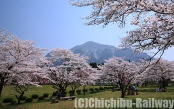 羊山公園・桜(ひつじやまこうえん・さくら)