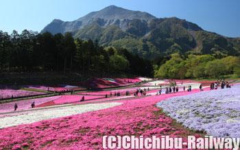 秩父羊山公園「芝桜の丘」(ちちぶひつじやまこうえん「しばざくらのおか」)