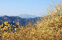 西ろうばい園からの眺め