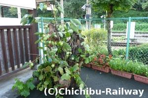 武州日野駅の飾り
